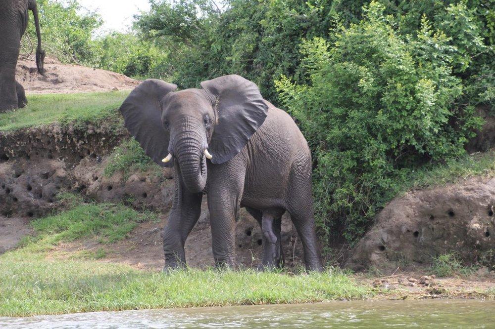 67 elephant.jpg