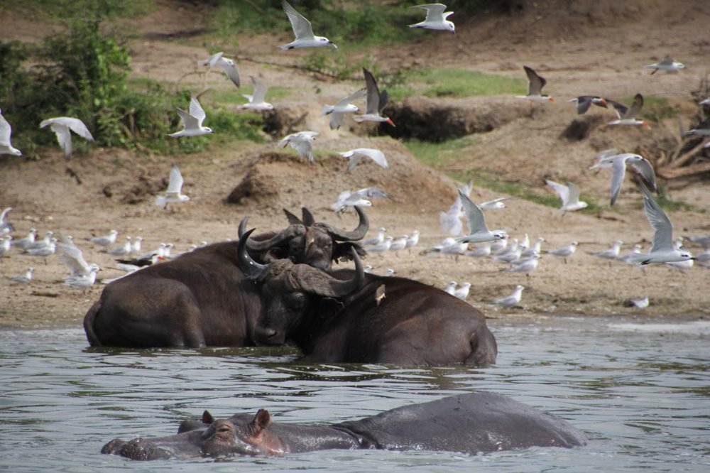 68 hippo cruise.jpg