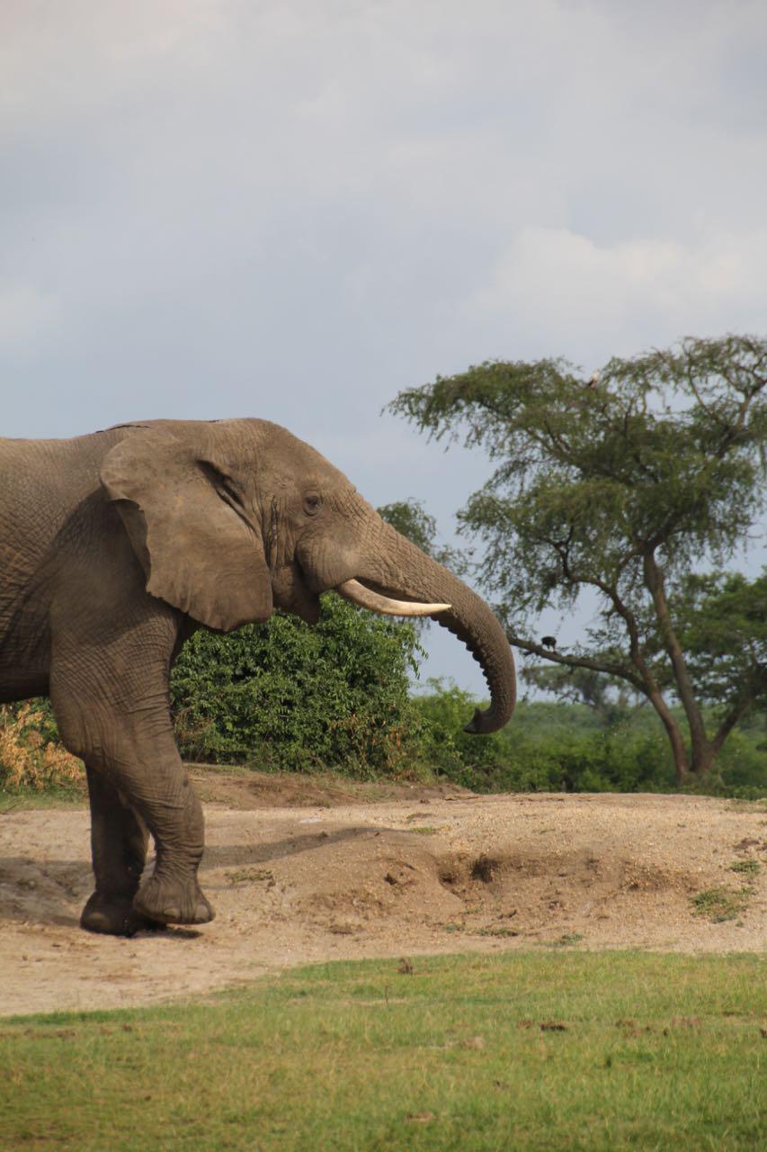 69 elephant.jpg