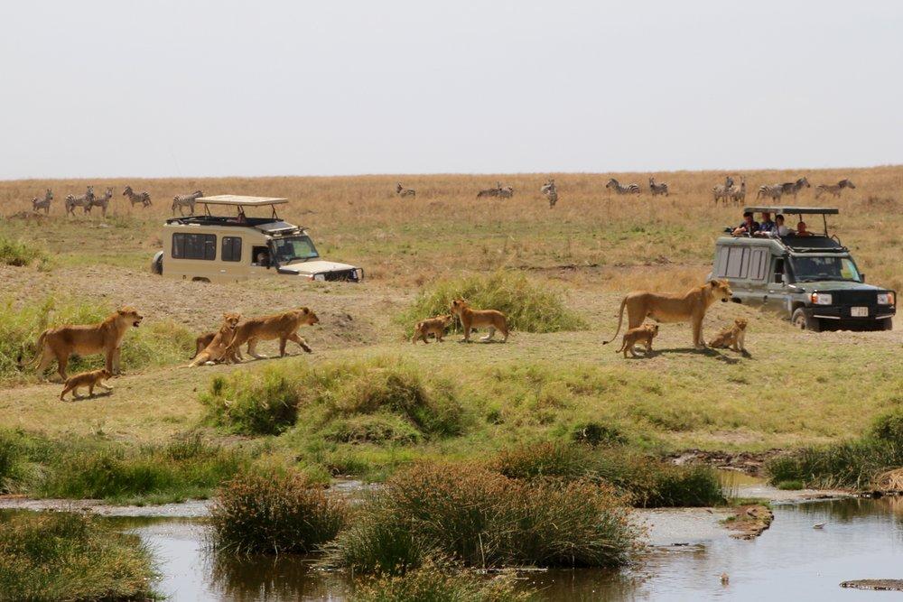 lion chase 1.jpg