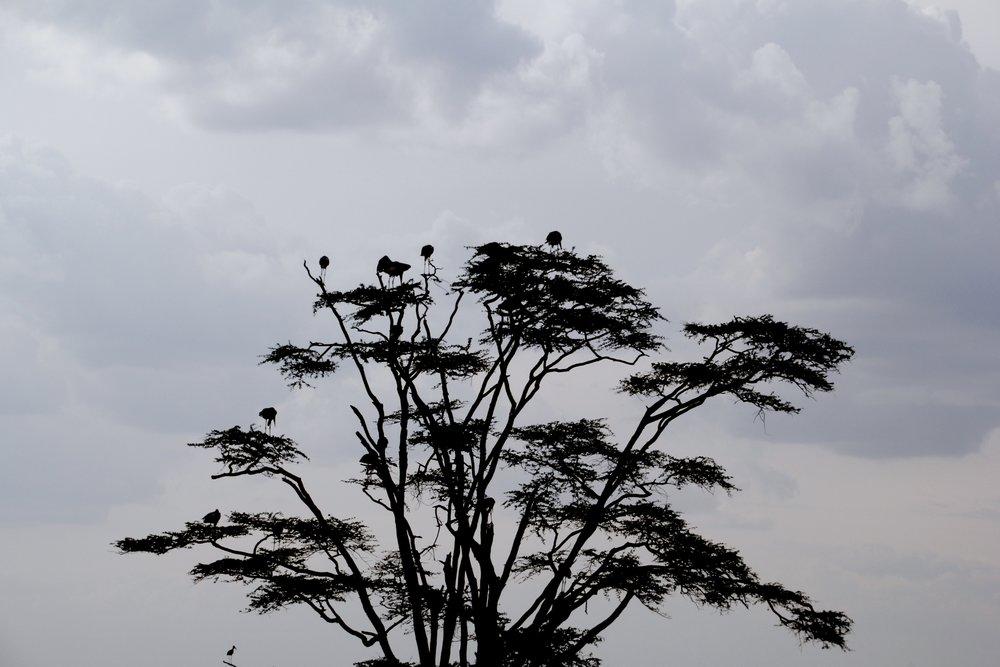 serengeti 7.jpg
