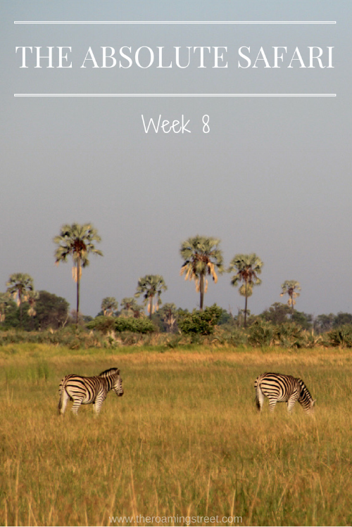 The Absolute Safari Week 8