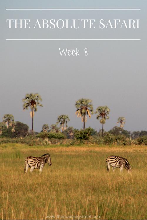 The Absolute Safari Week 8