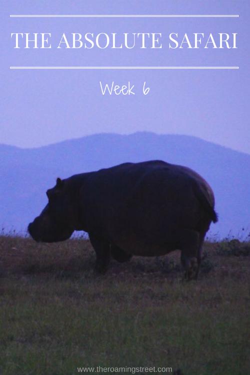 The Absolute Safari Week 6