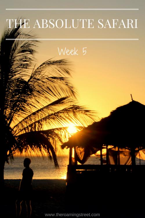 The Absolute Safari Week 5