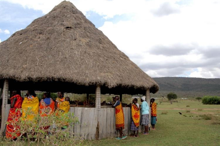 The Mzungu Zoo