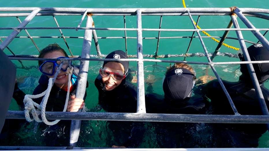 shark dive 4.jpg