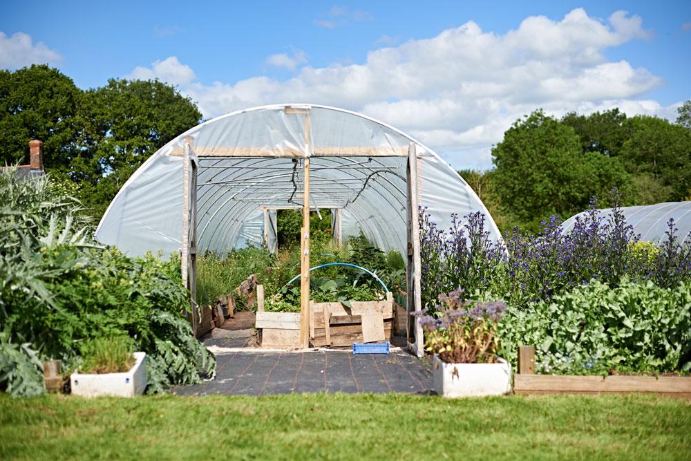 organicedibleflowers.jpg
