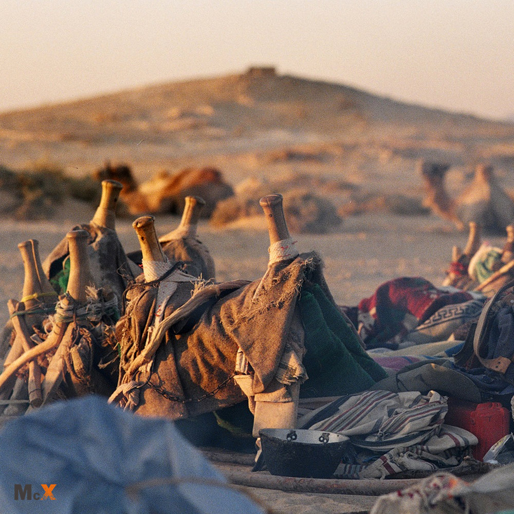 Camel saddles in the Sinai