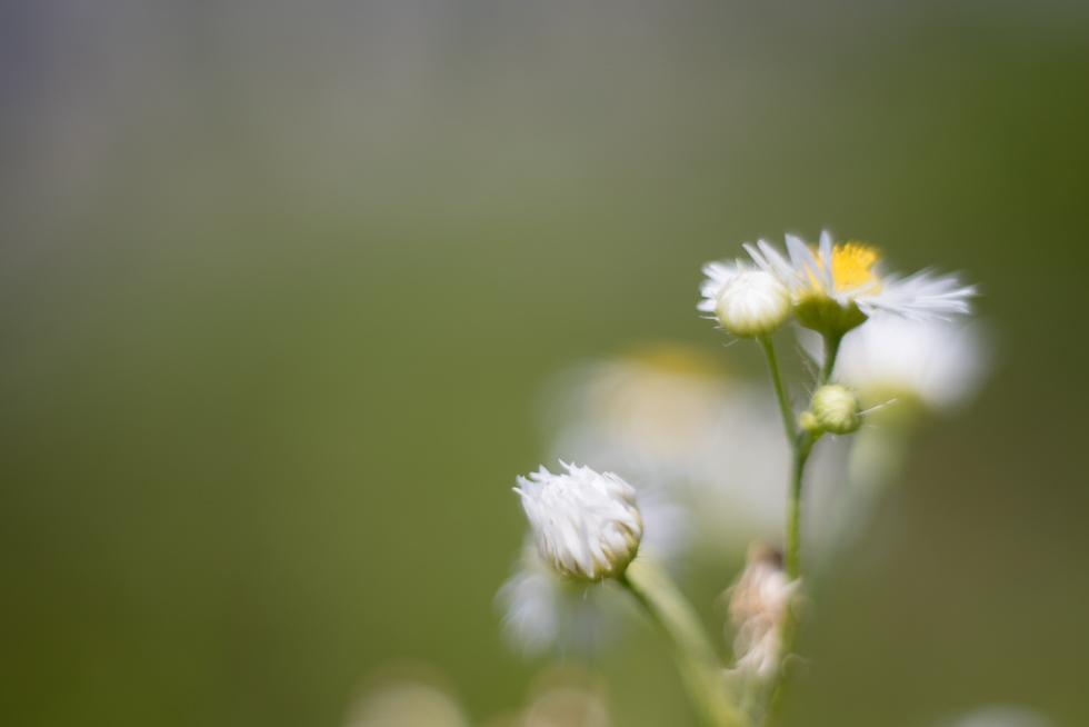 little-macro-flowers-in-color-by-Jenny-Diaz-Toronto-fine-art-nature-photographer