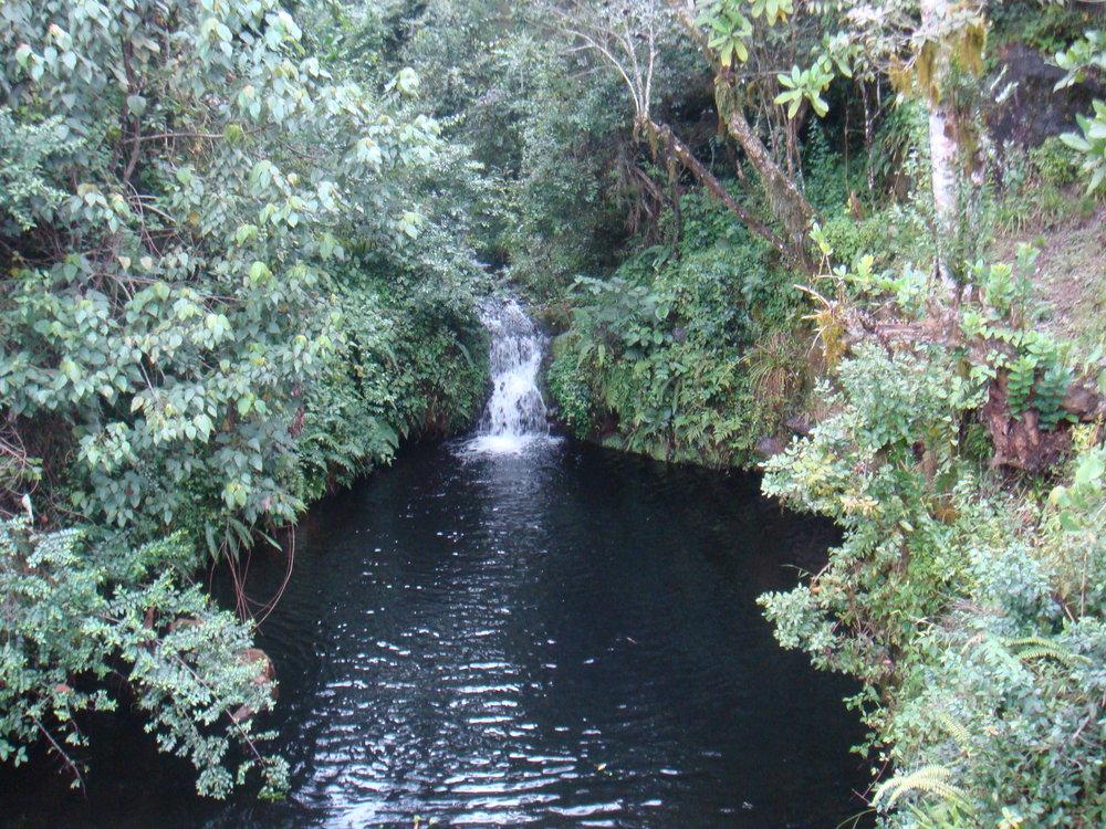 Day 1- Rainforest