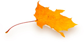 single fall leaf.jpg