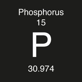 PHOSPHORUS MRI