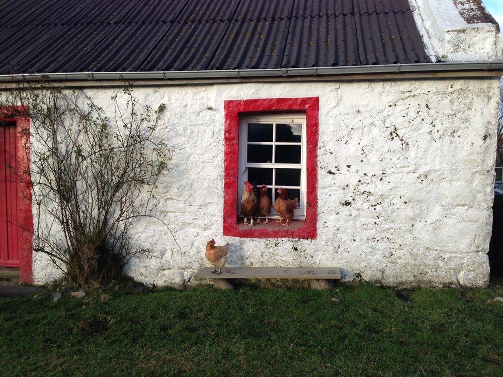 Hens / Studio Window