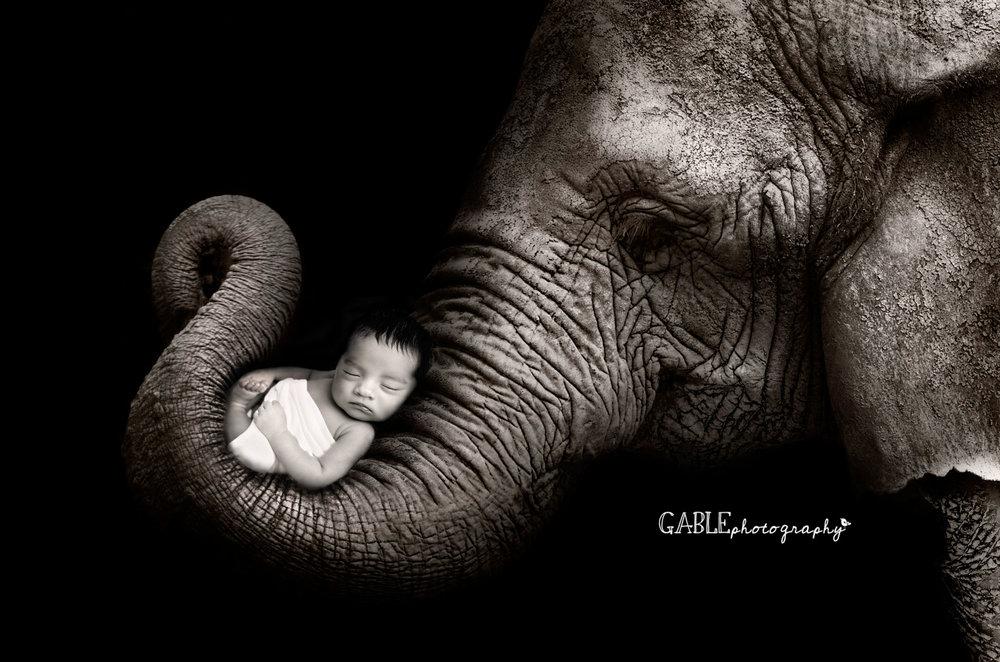 Newborn with elephant