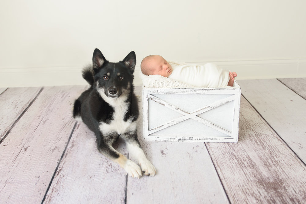 newborn with dog photo