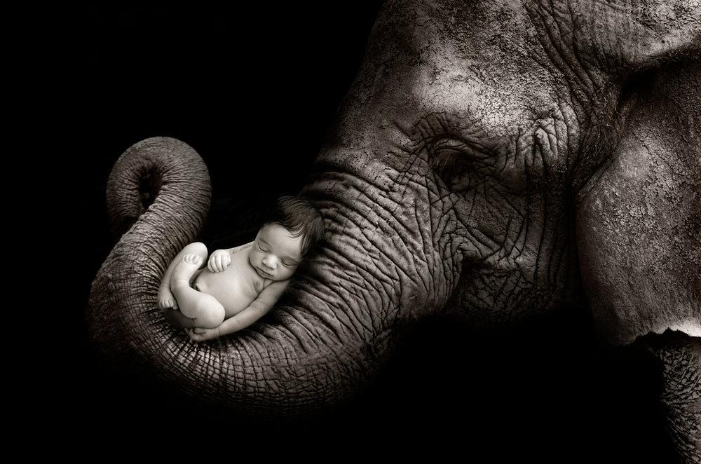 ElephantRyan.jpg