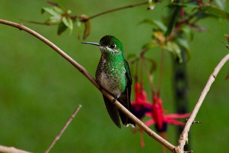 Bird in Peru