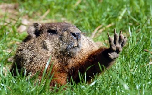 Like get a manicure, because  damn.  Got those hibernation hands. (  via )