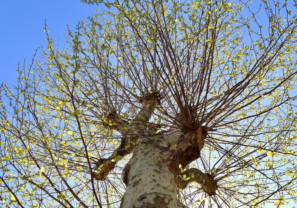 blossom4.jpg