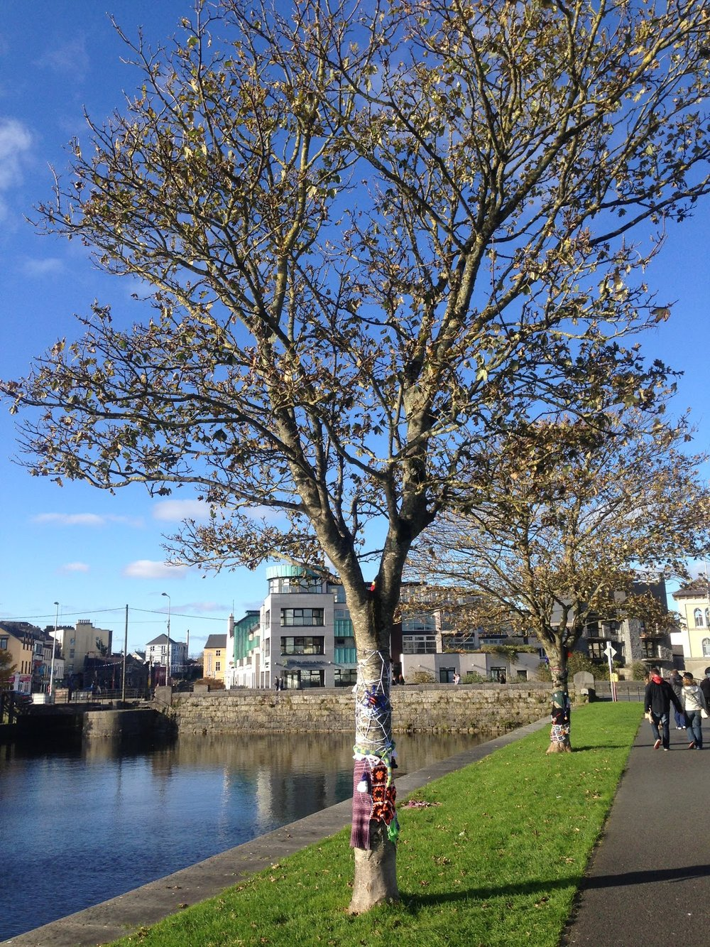 The two trees yarnbombed for Halloween alongside the Corrib River.