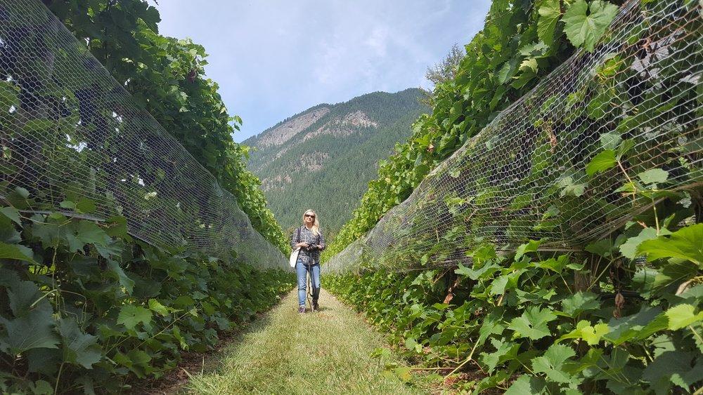 Sunnybrae Vineyards & Winery, Tappen, BC Canada
