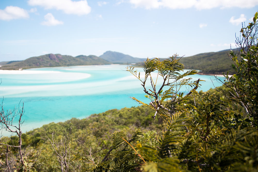 THE | WHITSUNDAYS