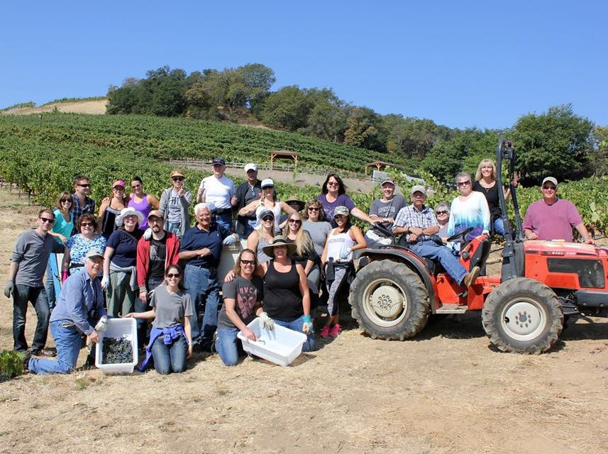 Wine club members during our popular Harvest Hands event, picking Zinfandel with Jim.