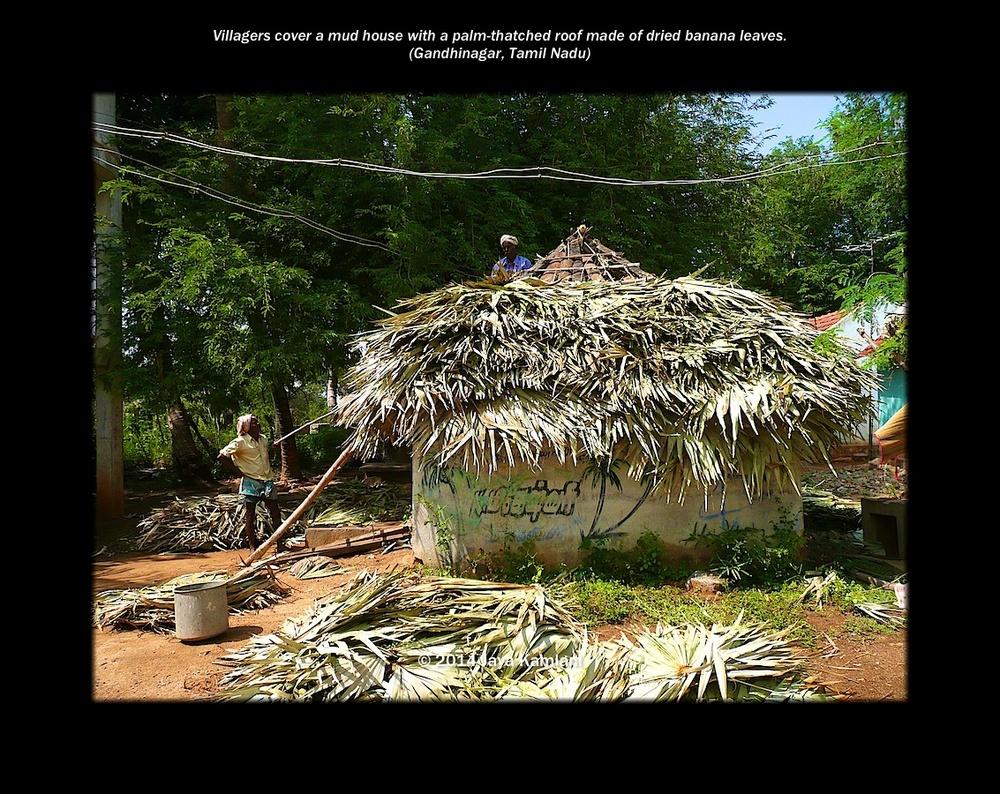 tamil_nadu_banana_leaf_house.jpg