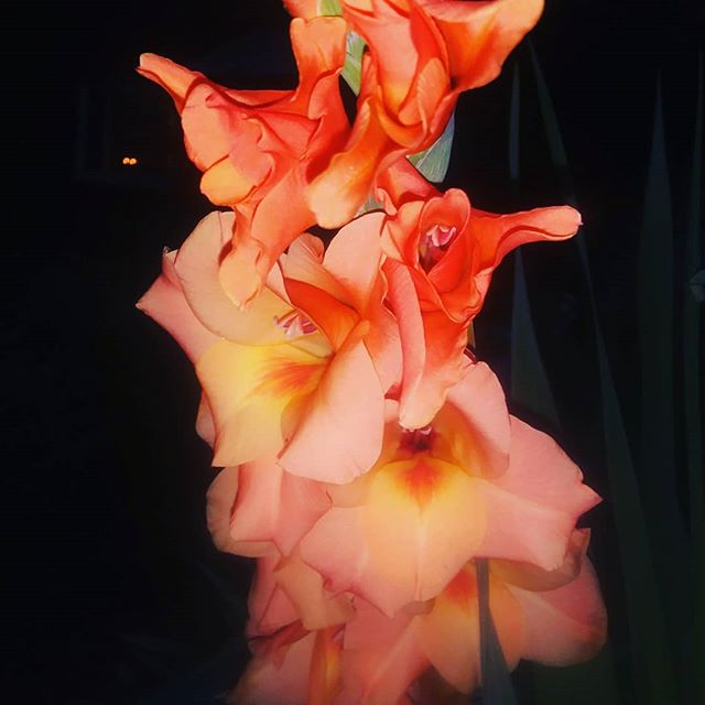 #nature #art #beauty #heartchakra #heart #love #chakras #energy #healing #gladiola #gladiolus #peach #Newmoon #mothernature #earth