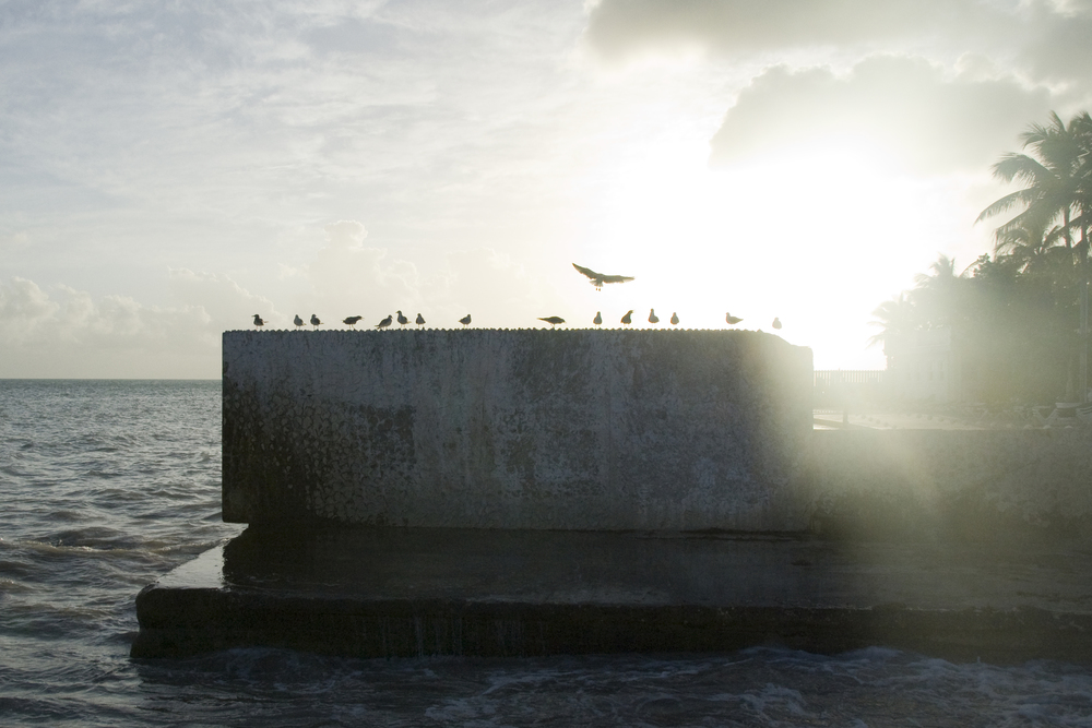 A seagull lands on a concrete slab jutting into the ocean in Key West, Fla.