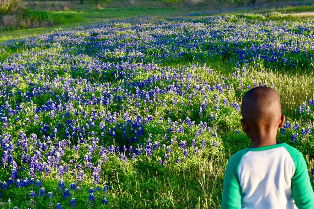 best patch of bluebonnets in the park