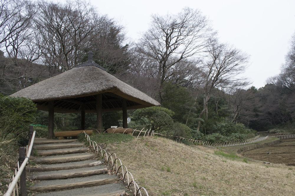 tokyo garden2.jpg