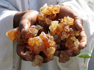 Acacia Seyal Powder Gum Arabic Usa 202 630 8738 Rated 1