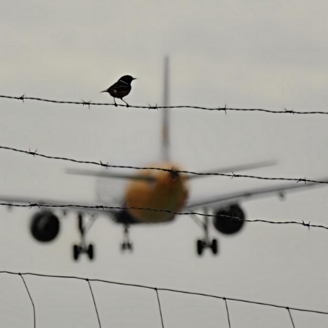 Setting the Airport Wildlife Hazard Scene