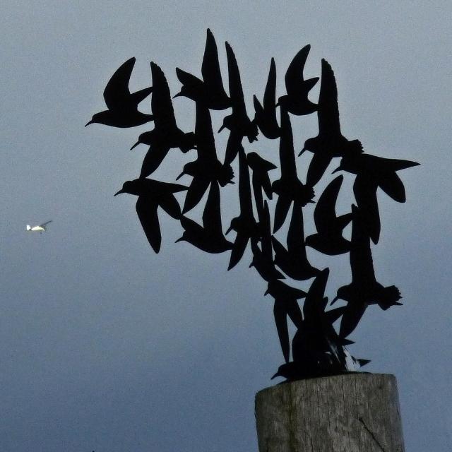 Airport Wildlife Risk Management: Framework and Consultation