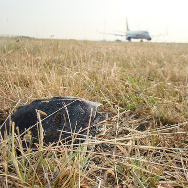 How to Set the Standards for Airport Wildlife Management Decisions