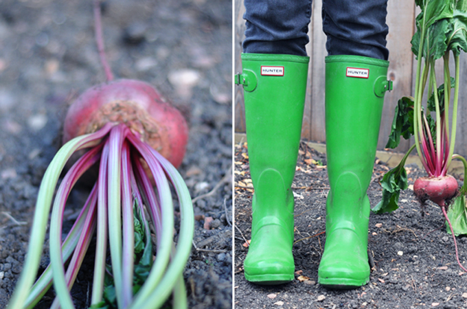 Nikki's Boots & Garden Beet