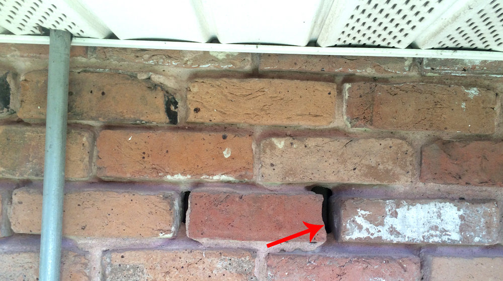 Look for holes in Brick exterior of home where pests can enter.