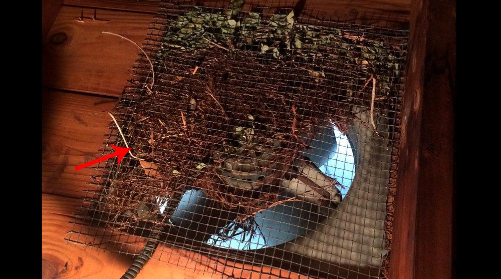 Nest in attic fan