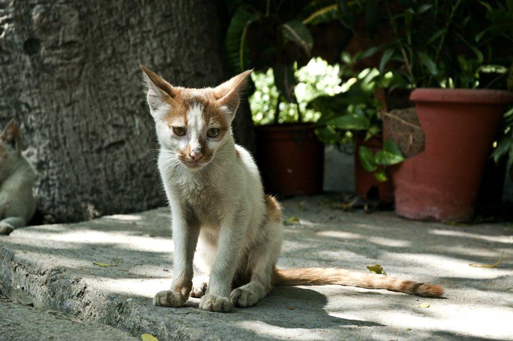 cats-61240_1280.jpg