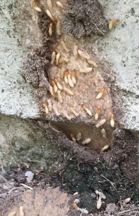 termites copy.png