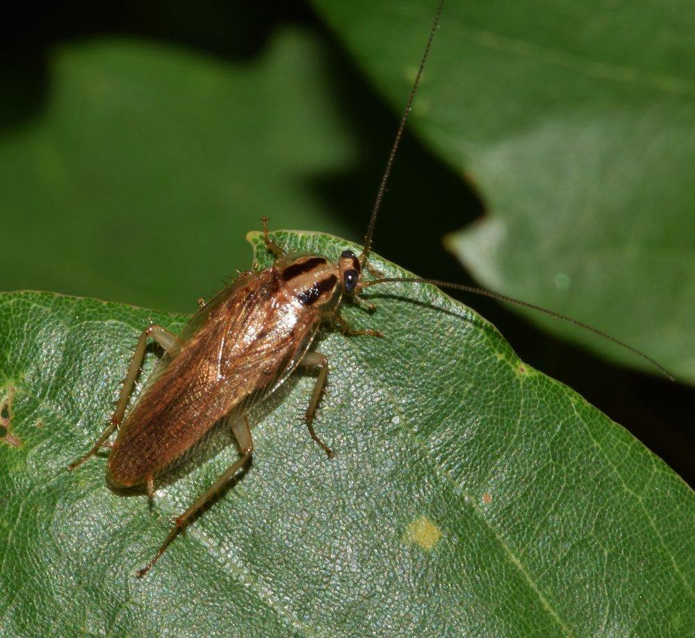 cockroach-1572632_1920.jpg
