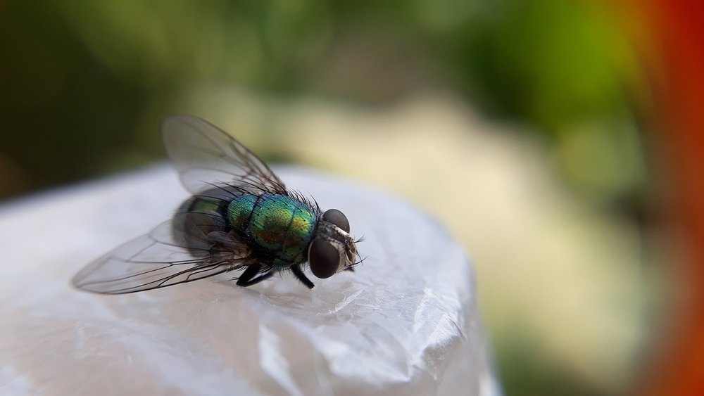 insect-3085543_1280.jpg