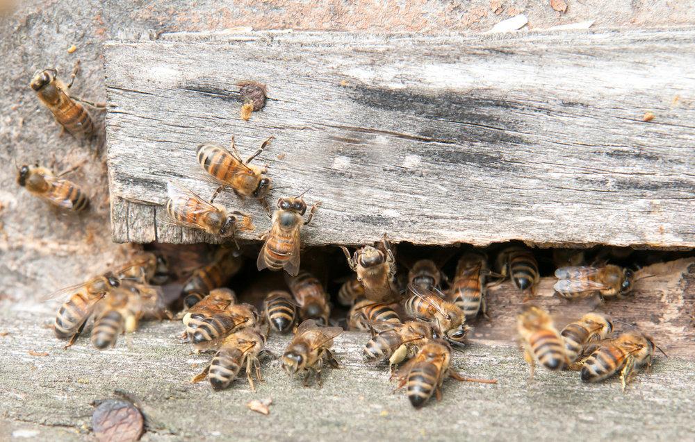 bee-in-beehive-PUXAQZX.jpg