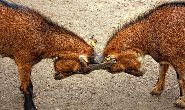 goats-173940_640.jpg