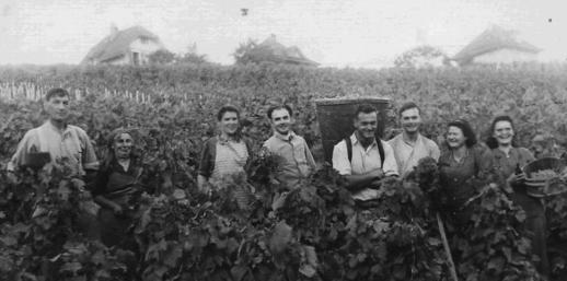 Historique - un centenaire en Terres de Lavaux