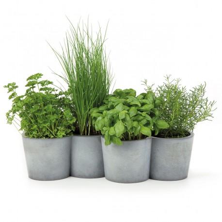 Plantes aromatiques.jpg