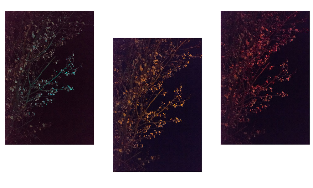cherry-blossoms-ready-set-go.jpg