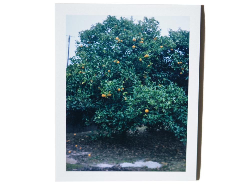 Polaroid_2.jpg